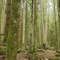 Some great loam on Giant Killer.- Woodlot Mountain Bike Trails: Blood Donor, Giant Killer + Hoots