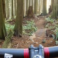 Bloggy Style is open and fast.- Woodlot Mountain Bike Trails: Upper Toadstool, Toadstool, Bloggy Style + Shotgun