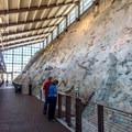 The quarry wall exposes actual dinosaur bones in place.- Dinosaur Quarry