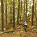 Some loamy, flowy sections.- Cypress Mountain Bike Trails: BLT, Upper Tall Cans + Wu Tang