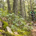 The trail seems to find all the rocks.- Cypress Mountain Bike Trails: BLT, Upper Tall Cans + Wu Tang