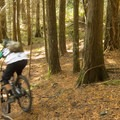 More loam, more flow!- Cypress Mountain Bike Trails: BLT, Upper Tall Cans + Wu Tang