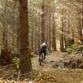 Upper Half Nelson gets you rolling right away.- Diamond Head Mountain Bike Trails: Half Nelson + Full Nelson Loop