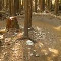 Great corners and burms.- Diamond Head Mountain Bike Trails: Half Nelson + Full Nelson Loop