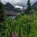 Wildflowers on the north bench above Lake Magog.- Lake Magog Hike via Bryant Creek + Wonder Pass