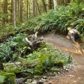 Whipping around corners.- Diamond Head Mountain Bike Trails: Half Nelson + Full Nelson Loop