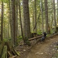 The faster the better.- Diamond Head Mountain Bike Trails: Half Nelson + Full Nelson Loop