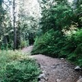 The first section of the Eagle Bluffs Trail.- Eagle Bluffs Hike, Cypress Mountain