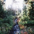 For parts of the trail you'll be walking up a small stream.- Eagle Bluffs Hike, Cypress Mountain