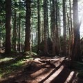 The light breaking through the trees near the peak. - Eagle Bluffs Hike, Cypress Mountain