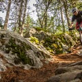 One of many rock features.- South Whistler Mountain Bike Trails: It's Business Time (Duncan's Trail)