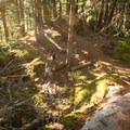 Downhill turns.- South Whistler Mountain Bike Trails: It's Business Time (Duncan's Trail)