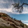 Cloud, rock, and juniper.- Devils Kitchen Hike
