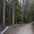 The trail near the Wild Basin Trailhead.- Lion Lakes Hike