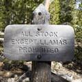 Wild Basin is llama friendly.- Lion Lakes Hike