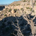 The sun casts a long shadow over ancient juniper.- Lunch Loop Mountain Bike Trails: Curt's Lane + Miramonte Rim Loop