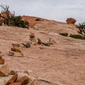The trail is well marked and well travelled.- Upheaval Dome Hike