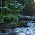 There are multiple creeks that cross the trail.- Mount Steele Hike