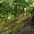 The trail passes through lush green forested areas.- Mount Steele Hike