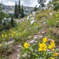 Wildflowers near the lake.- Twin Lakes Hike