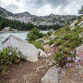 More wildflowers on the trail.- Twin Lakes Hike