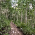The trail winds its way through the aspens.- Twin Lakes Hike