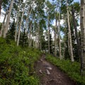 Hiking through the aspens to Lake Solitude.- Lake Solitude Trail Hike