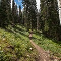 Once you cross the ski slopes, the trail winds its way up through the woods.- Lake Solitude Trail Hike