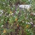 Wildflowers line the lake in the summer months. - Lake Solitude Trail Hike