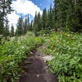 Lake Solitude Trail.- Lake Solitude Trail Hike