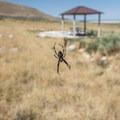 Spiders are plentiful in the summer months.- Bridger Bay Campground