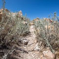 The trail to Lady Finger Point is rocky, but it is an easy stroll.- Lady Finger Point