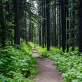 - Pacific Northwest National Scenic Trail Section 1
