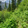 Many of the trails were overgrown and bushy.- Pacific Northwest National Scenic Trail Section 1