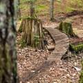 Twisty bridge on Danimal North.- Westside Mountain Bike Trails: Pura Vida + Danimal