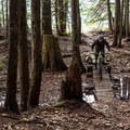 Danimal North has plenty of wooden features.- Westside Mountain Bike Trails: Pura Vida + Danimal