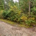Pura Vida entrance (you'll be entering from the left).- Westside Mountain Bike Trails: Pura Vida + Danimal