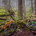 Mossy Forests near the bottom of Pura Vida.- Westside Mountain Bike Trails: Pura Vida + Danimal