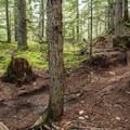 One of the more demanding lines on Danimal North.- Westside Mountain Bike Trails: Pura Vida + Danimal