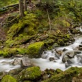 Pura Vida meets Danimal South immediately after crossing this creek.- Westside Mountain Bike Trails: Pura Vida + Danimal