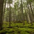 Moss carpet.- Westside Mountain Bike Trails: Pura Vida + Danimal