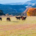 Pastoral landscapes along the lower reaches of Hell's Backbone Road.- Hell's Backbone Scenic Drive