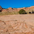 Thee trail crosses open range; be careful to not disturb the cows.- Zebra Canyon + Tunnel Slot Hike