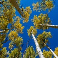 Come in the fall for changing aspen leaves.- Hell's Backbone Scenic Drive