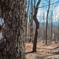 Winter brings open views to the Whitewater Falls Trail.- Upper Whitewater Falls Hike