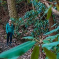 Rhododendrons line the trail in places.- Upper Whitewater Falls Hike