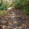 Natural stairs on the climb down to the base of the falls.- Upper Whitewater Falls Hike