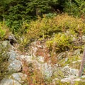 The trailhead is not so obvious.- Brandywine Meadows Hike