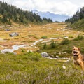 The dogs love all the open terrain.- Brandywine Meadows Hike