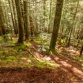 The majority of the hike is steeper than it looks here.- Brandywine Meadows Hike